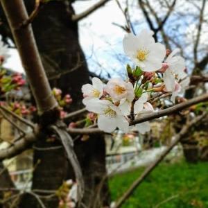 映え~✨な神社🌸春バージョン🌸