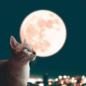 8月12日は牡牛座で下弦の月です~不要な思考、感情、悩みを手放して~