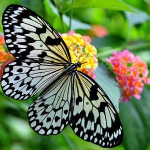メタモルフォーゼ~美しい蝶への変容
