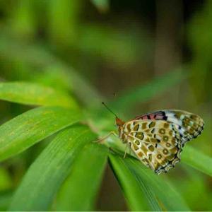 動かない蝶