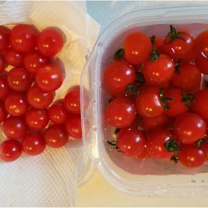 ミニトマトの長持ち保管方法を実験してみた
