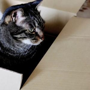 リベンジ決定・・ライ麦のブール&箱猫様♪