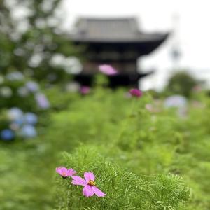 般若寺(奈良県)