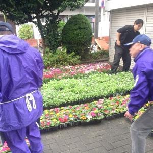 商店街の花植えの手伝い。