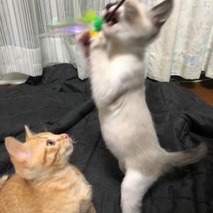 フウ&ライ犬猫里親さがし会デビューの予感
