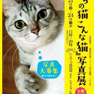 最終日「うちの猫こんな猫写真展」は18時までよ(^^♪
