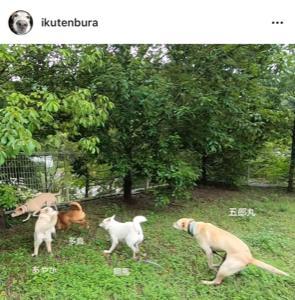 犬達と一緒に遊びましょう!!