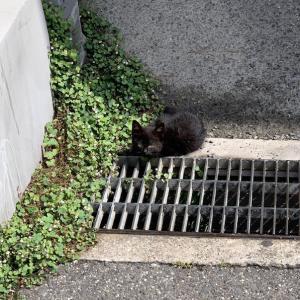 ある意味猫にとって日常的な事