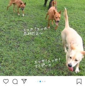 保護犬達を家族に迎えませんか?
