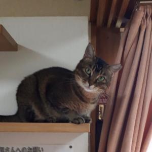 あの凶暴猫ソフィアを!(1)