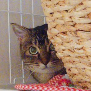 あの凶暴猫ソフィアを!(2)