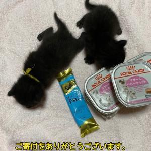 こっちの猫ちゃんたちもご寄付に感謝!感謝!