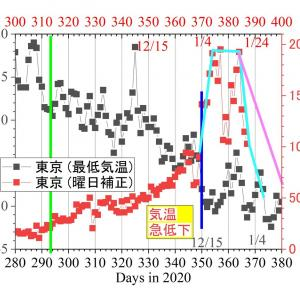 東京。1/21の新規陽性は1471人-ー-1/7~/18のステップの半分。予想外に人々の体調の変調が長引いていて「1/21迄に500人以下の期待」に届かず