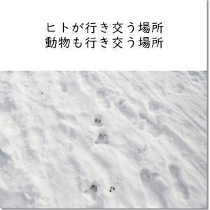 雪の公園を散歩したら、