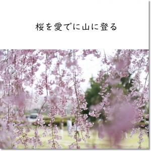 桜を愛でに山に登る