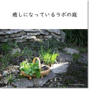 癒しになっているラボの庭