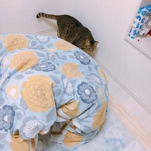 パパの部屋のもう1つの寝床