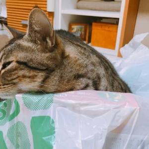 色んな物を枕にする猫様のビルですが…