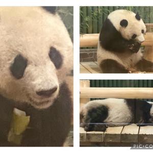 神戸王子動物園