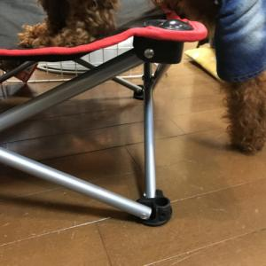 小型犬に乗り降りさせても安心のローチェアは釣り具ショップで探せ