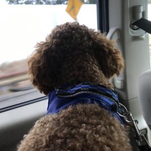 犬の車酔いに万全の対策して臨んだのにゴール直前にハンドキャッチ…?