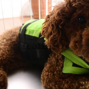 【犬用ライフジャケット】キャンプ犬の川遊び用に買ったら1550円で送料無料なのに機能的だった
