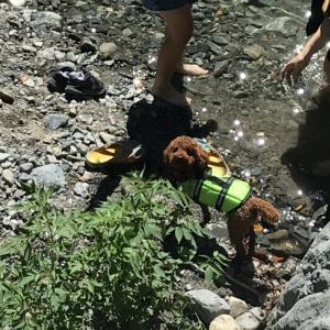 【夏休み川遊びキャンプ】犬は飼い主のすることをよく見ていると知った夏の日