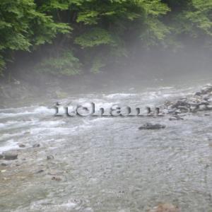 【豪雨がもたらす渓流の幻想的な光景】真夏の道志川に幸運の川霧を見た