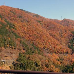 【紅葉キャンプ】 実は道志って紅葉を楽しむキャンプに向いてない理由
