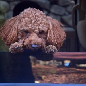 【道志で唯一ドッグランのあるキャンプ場】 早めの撤収は愛犬との約束を果たすために