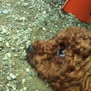【キャンプ犬の呪い】 怨念が破壊神を呼ぶ・呪われたソロキャンプ