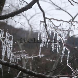 【冬キャンプで発見】 樹氷を自作する方法と野生の鹿の大量出現と