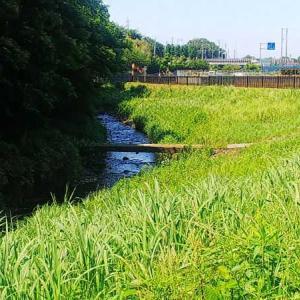 和泉川沿いを歩く