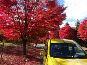 紅葉散歩など