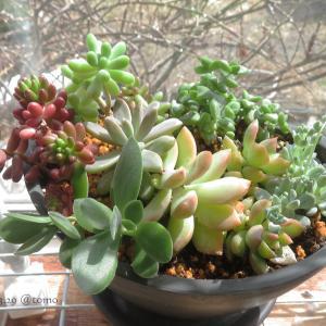 そろそろ植物達、めざめの季節♪