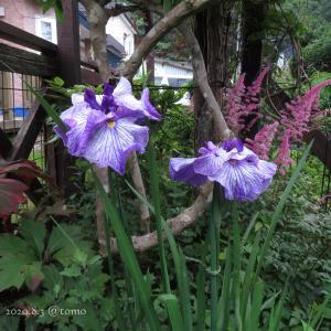 野菜の花、季節の花