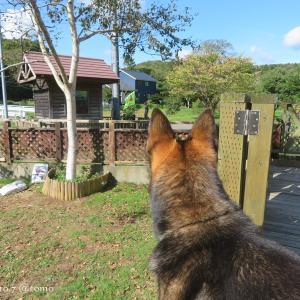 近所の散歩犬