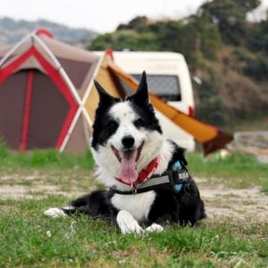 犬連れ soloキャンプ