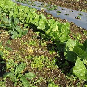 落花生収穫とアスパラゾーンの整理開始!