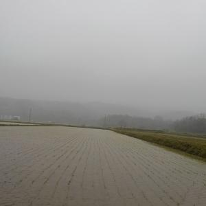 一日中雨が降ったり止んだり・・・