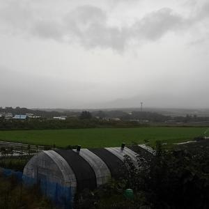雨中の収穫!