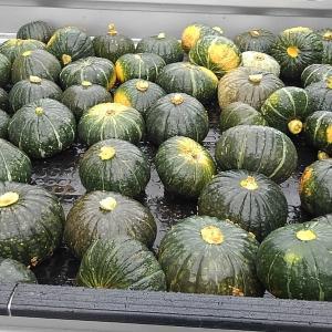 大量のかぼちゃと道普請など・・・
