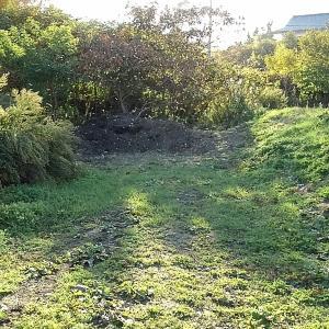 大根間引きと長ネギ収穫!
