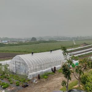 トマト脇芽栽培開始と熱中症対策!