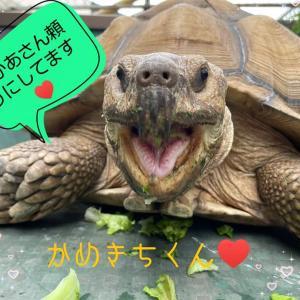 ☆felicite 練習会~かめきちくん☆