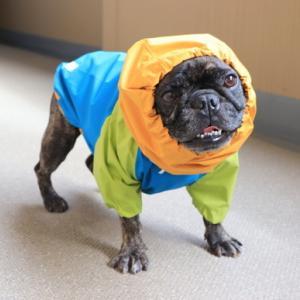 犬用の雨合羽を買う