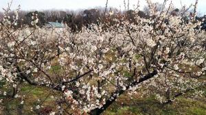 春はもう直ぐそこに!