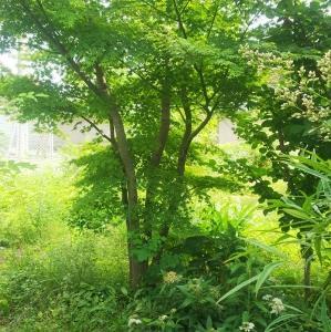 梅雨入りと庭