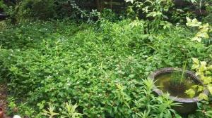 梅雨時の「もやい」の設えと草刈