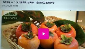 コロナウィルスと柿渋